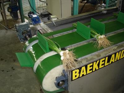 Binding onion